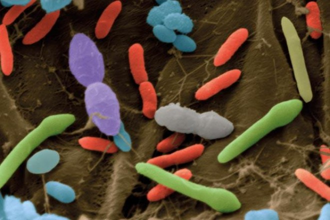 GUT Bacteria – Shaping the way you are