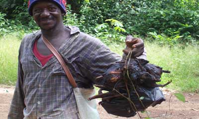 Ebola: is bushmeat behind the outbreak?