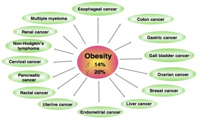 Is obesity increases Cancer risk?